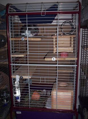 cage 5   nola chinchilla rescue
