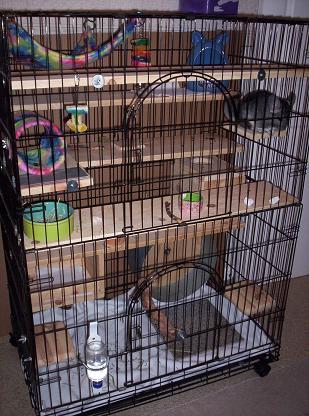 cage 6   nola chinchilla rescue