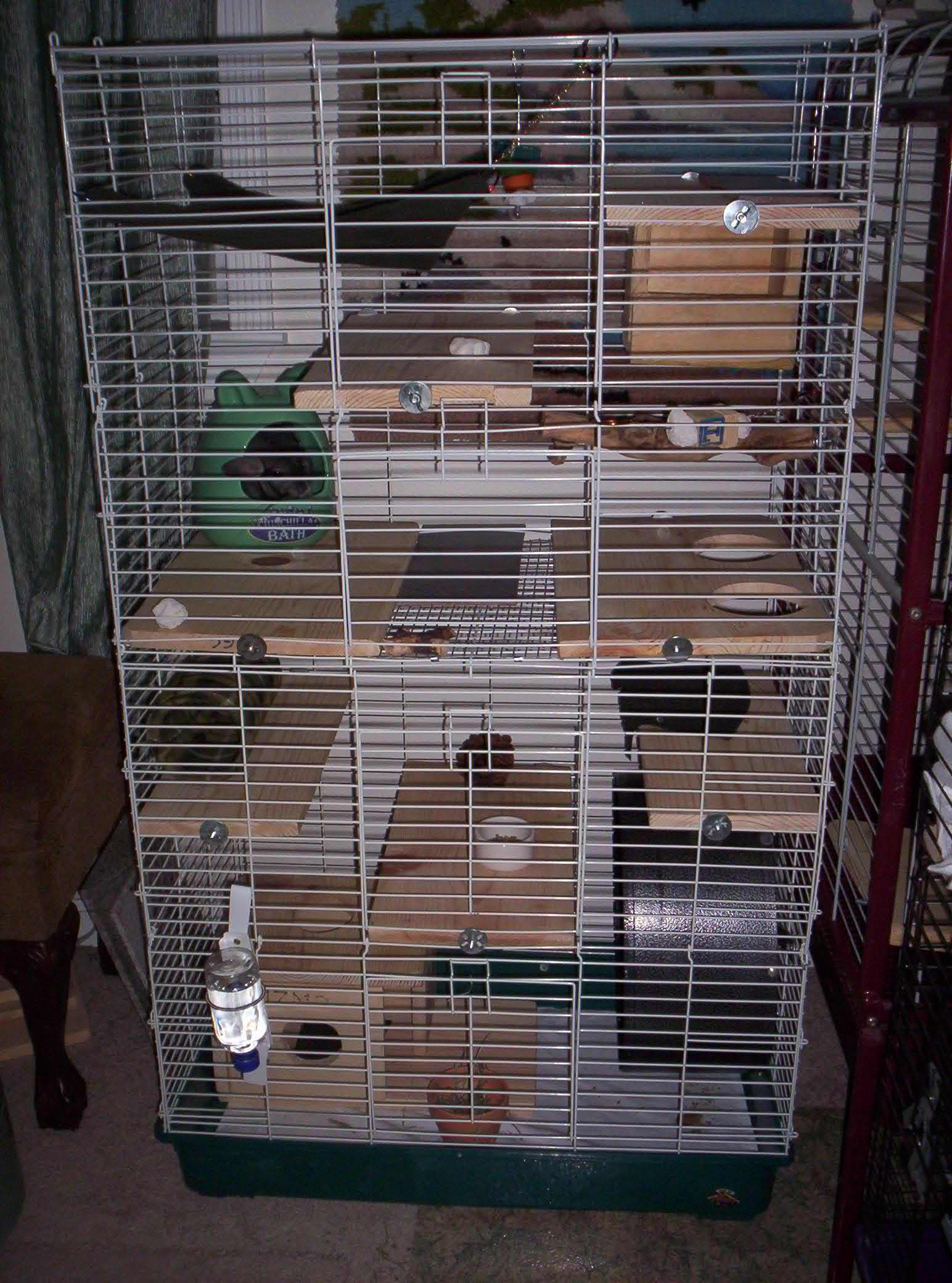 Homemade Chinchilla Cages Plans Important information on chinchillas