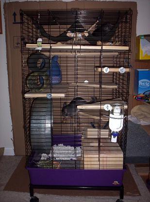 my first home cage   nola chinchilla rescue