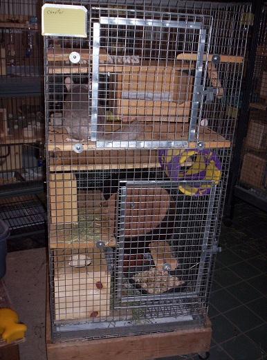 wire cage 2x2x4   nola chinchilla rescue